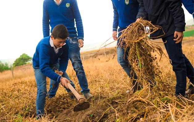 Proyectos Agricolas 1